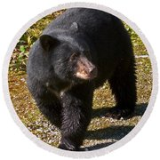Black Bear Round Beach Towel