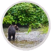 Black Bear Eating A Salmon In Fish Creek In Tongass National Forest-ak Round Beach Towel