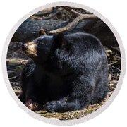 Black Bear Guarding Food Round Beach Towel