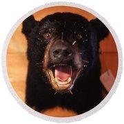 Black Bear Head Round Beach Towel