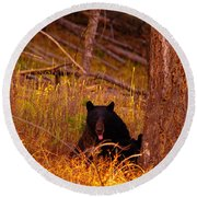 Black Bear Sticking Out Her Tongue  Round Beach Towel