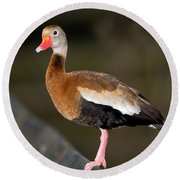 Black-bellied Whistling Duck Round Beach Towel