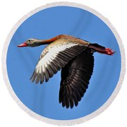 Black-bellied Whistling-duck In Flight  Round Beach Towel