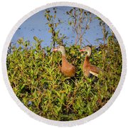 Black-bellied Whistling Ducks Round Beach Towel