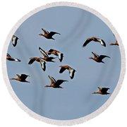 Black-bellied Whistling Ducks In Flight Round Beach Towel