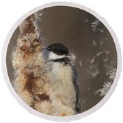 Black-capped Chickadee In Winter Round Beach Towel by Mircea Costina Photography