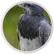 Black-chested Buzzard-eagle Round Beach Towel