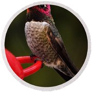 Black Chinned Male Hummingbird Round Beach Towel