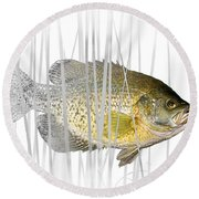 Black Crappie Pan Fish In The Reeds Round Beach Towel