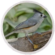 Black-crested Titmouse Round Beach Towel
