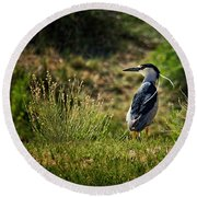 Black-crowned Night Heron At Carson Lake Wetlands Round Beach Towel