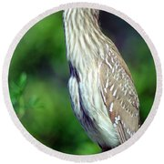 Black-crowned Night Heron Juvenile Round Beach Towel