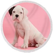 Black Eared White Boxer Puppy Round Beach Towel by Mark Taylor