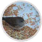 Black Eyed Junco Round Beach Towel