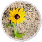 Black-eyed Susan Flower On A Gneiss Rock Round Beach Towel