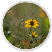 Black-eyed Susan Round Beach Towel