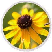 Black-eyed Susan With Friend Round Beach Towel