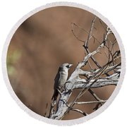 Black-faced Cuckoo Shrike Round Beach Towel