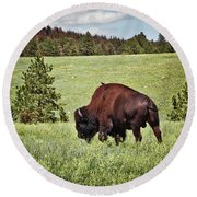 Black Hills Bull Bison Round Beach Towel by Robert Frederick