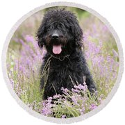 Black Labradoodle Round Beach Towel