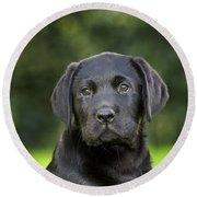 Black Labrador Puppy Round Beach Towel
