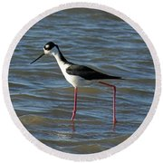Black Necked Stilt Round Beach Towel
