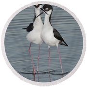 Black-necked Stilts Round Beach Towel