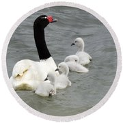 Black Necked Swan Patagonia  Round Beach Towel