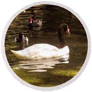 Black-necked Swan Round Beach Towel