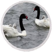 Black Necked Swans Patagonia 1 Round Beach Towel