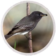Black Phoebe Round Beach Towel