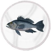 Black Sea Bass 3 Round Beach Towel