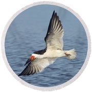 Black Skimmer Round Beach Towel