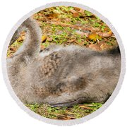 Black Swan Cygnet Round Beach Towel