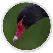 Black Swan Series - 3 Round Beach Towel