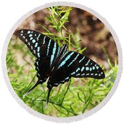 Black Swordtail Butterfly Round Beach Towel