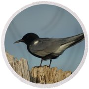 Black Tern Round Beach Towel