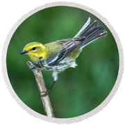 Black-throated Green Warbler, Female Round Beach Towel