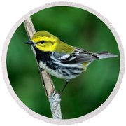Black-throated Green Warbler, Male Round Beach Towel