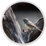 Black Throated Sparrow Round Beach Towel