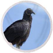 Black Vulture - Coragyps Atratus  Round Beach Towel