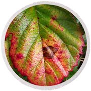 Blackberry Leaf In The Fall 4 Round Beach Towel
