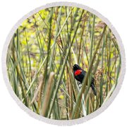 Blackbird In Reeds Round Beach Towel