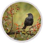 Blackbird On Branch Round Beach Towel