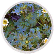 White Wooly Daisies On Borrego Palm Canyon Trail In Anza-borrego Desert State Park-ca Round Beach Towel