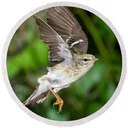 Blackpoll Warbler Round Beach Towel