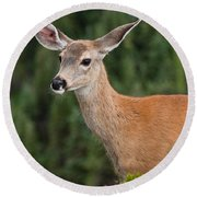 Blacktail Doe Looking At The Camera Round Beach Towel