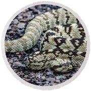 Blacktailed Rattlesnake Round Beach Towel