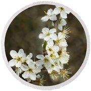 Blackthorn Or Sloe Blossom  Prunus Spinosa Round Beach Towel