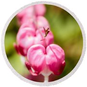 Bleeding Heart Blossom  Round Beach Towel